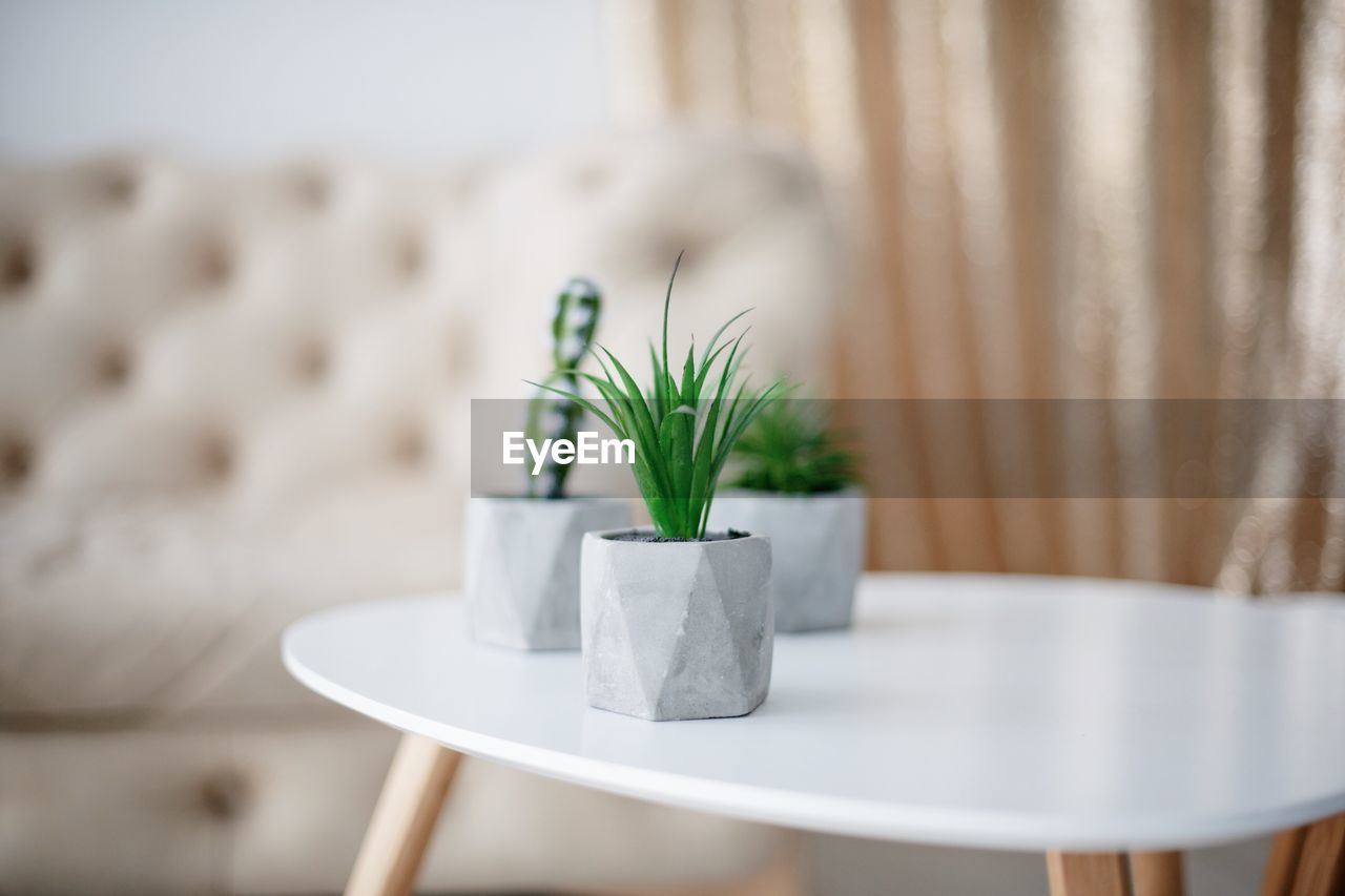 table, plant, indoors, no people, nature, selective focus, decoration, green color, growth, potted plant, furniture, leaf, day, close-up, plant part, white color, home interior, wood - material, focus on foreground, coffee table, houseplant, crockery
