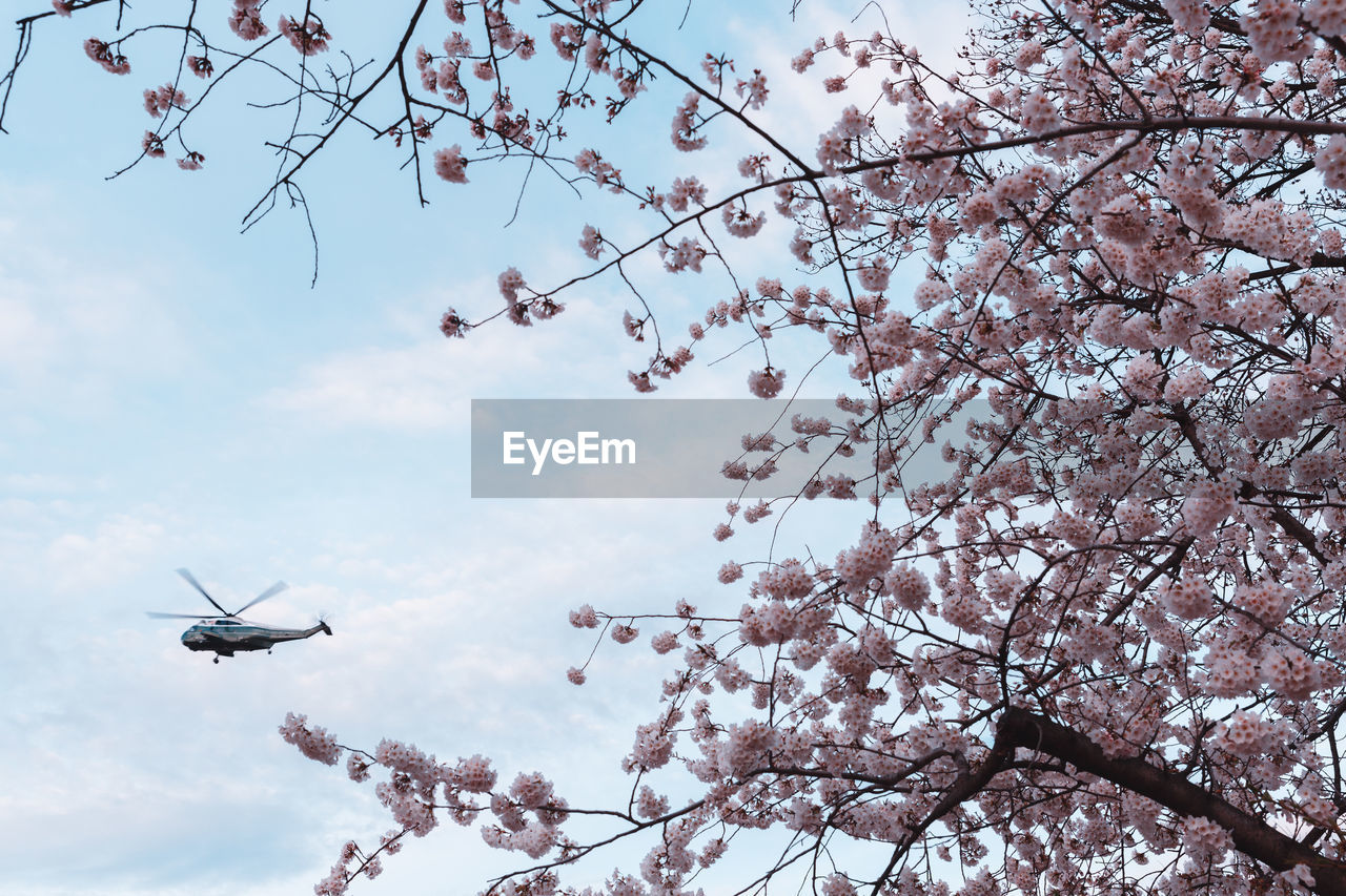 tree, sky, low angle view, plant, flower, branch, flowering plant, nature, flying, mode of transportation, air vehicle, cloud - sky, blossom, growth, transportation, beauty in nature, no people, springtime, airplane, day, cherry blossom, outdoors, cherry tree