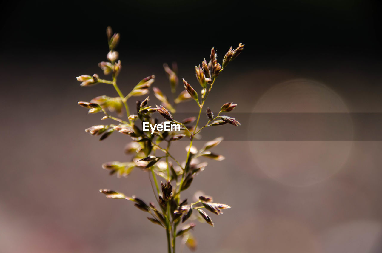 nature, growth, beauty in nature, moon, plant, flower, no people, outdoors, close-up, freshness, sky, day