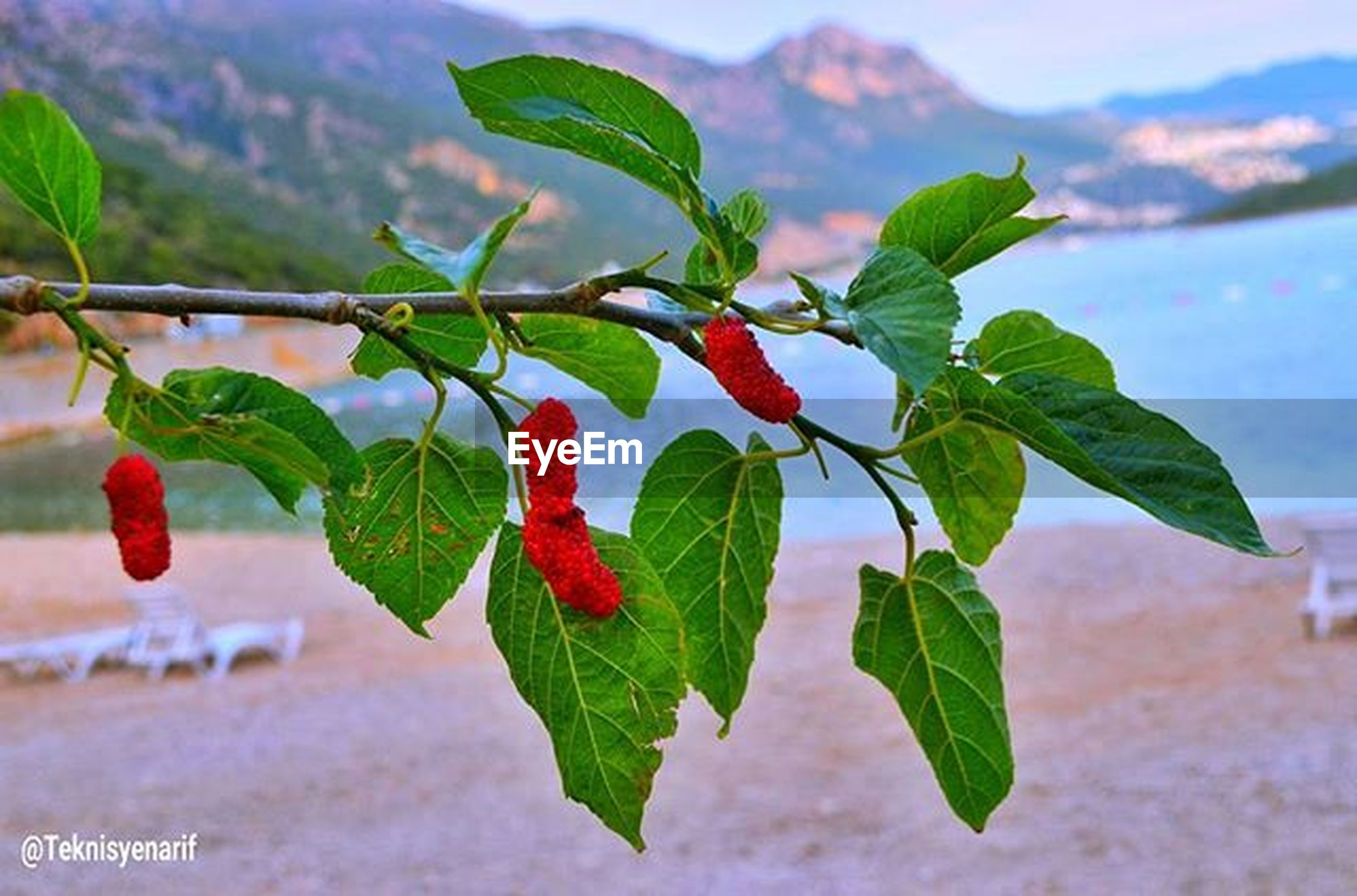 leaf, growth, focus on foreground, close-up, red, plant, freshness, nature, green color, beauty in nature, sky, growing, day, selective focus, stem, outdoors, no people, bud, fragility, flower