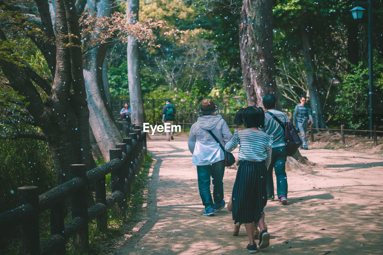 tree, rear view, plant, real people, full length, walking, women, men, group of people, nature, adult, growth, casual clothing, lifestyles, day, togetherness, leisure activity, trunk, tree trunk, people, the way forward, outdoors, couple - relationship