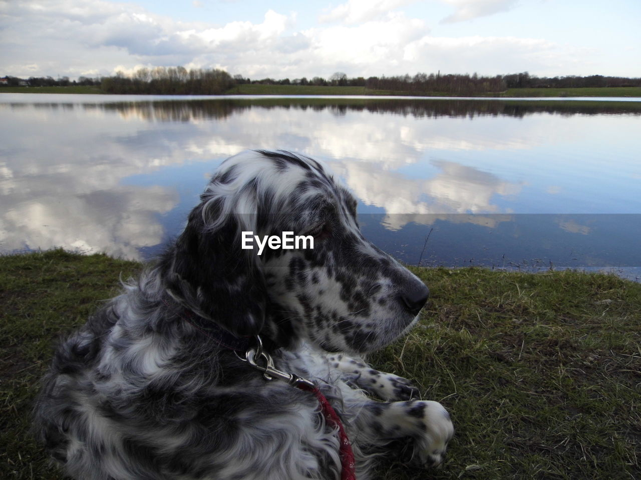dog, canine, pets, mammal, one animal, domestic, animal, domestic animals, animal themes, water, vertebrate, lake, nature, grass, pet collar, cloud - sky, sky, day, looking, no people, outdoors