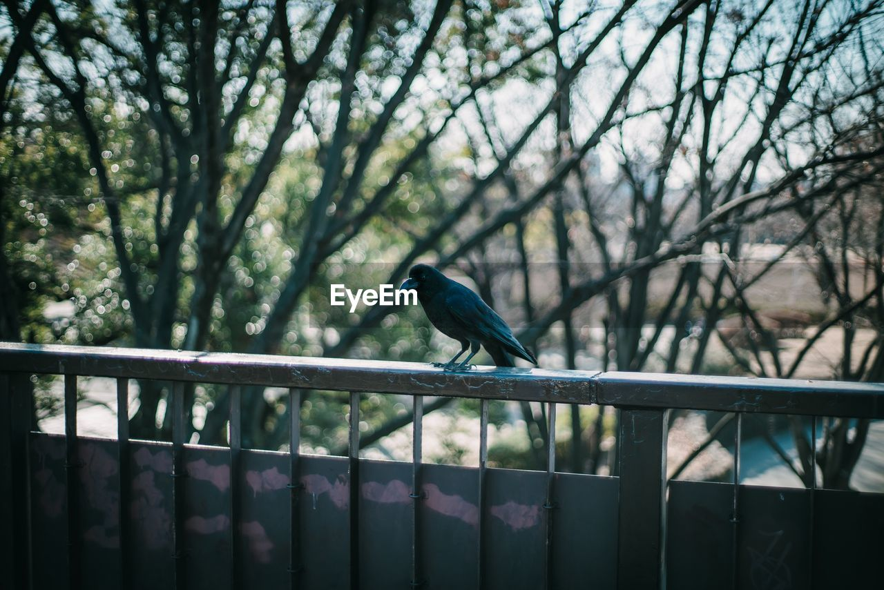 tree, animal wildlife, railing, one animal, animal, animal themes, animals in the wild, bird, vertebrate, plant, perching, day, nature, branch, outdoors, no people, metal, barrier, boundary, full length