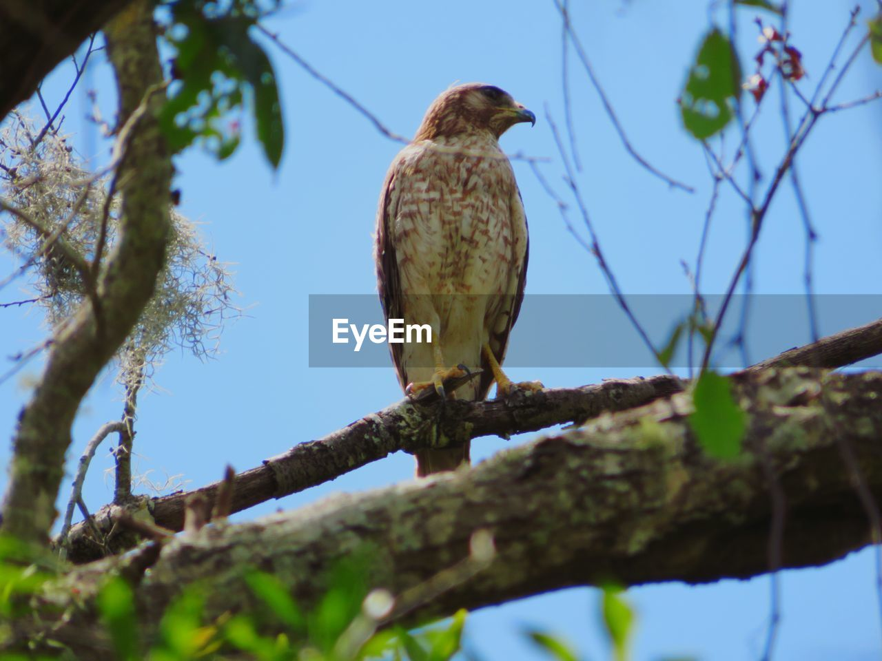 tree, plant, low angle view, branch, vertebrate, animal themes, bird, animal, perching, one animal, animal wildlife, nature, animals in the wild, day, sky, no people, selective focus, bird of prey, outdoors, focus on foreground, eagle