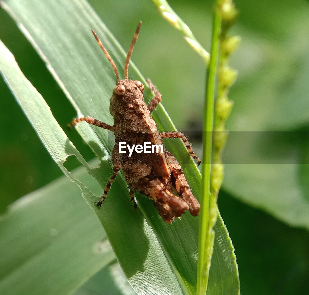 insect, invertebrate, animals in the wild, animal wildlife, close-up, green color, animal, animal themes, plant part, leaf, one animal, nature, day, focus on foreground, plant, no people, growth, selective focus, outdoors, sunlight