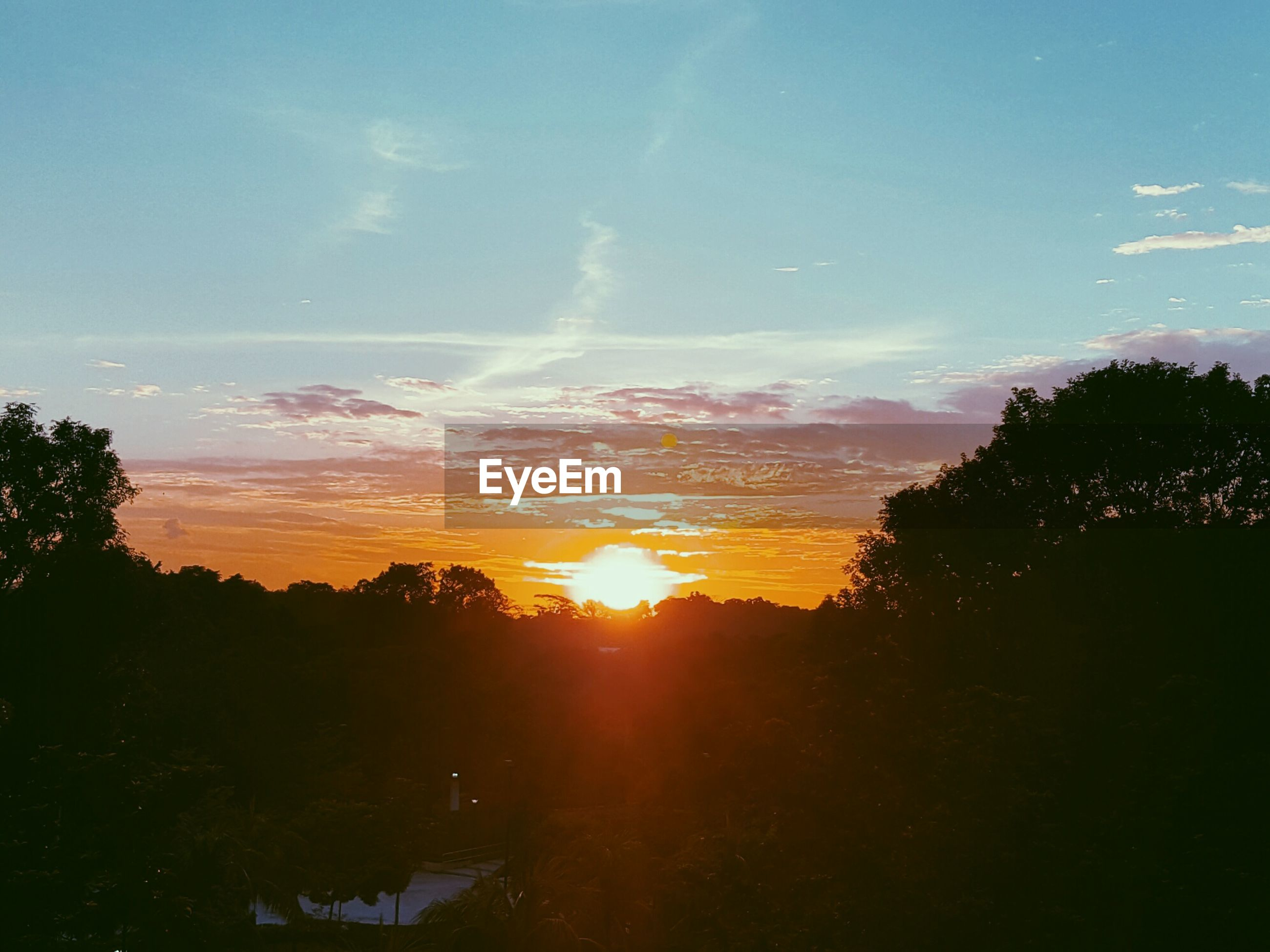 sunset, tree, beauty in nature, nature, sky, orange color, scenics, no people, growth, outdoors, water, day