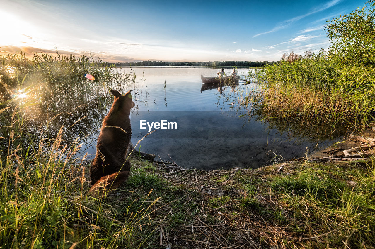 water, sky, plant, grass, reflection, lake, animal, nature, cloud - sky, no people, vertebrate, animal themes, tranquility, day, domestic, one animal, beauty in nature, pets, canine, outdoors