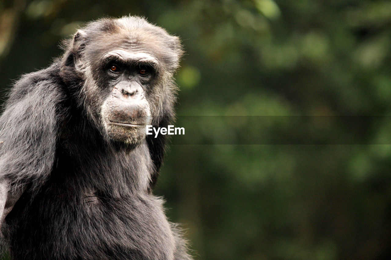 one animal, primate, animals in the wild, animal themes, mammal, focus on foreground, monkey, animal wildlife, portrait, day, outdoors, nature, no people, looking at camera, close-up