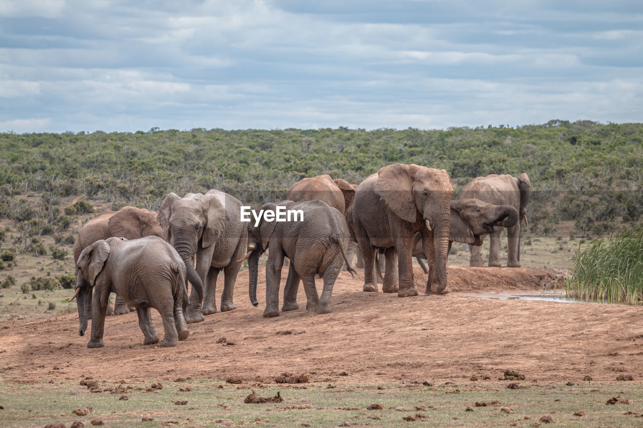VIEW OF ELEPHANT IN THE FARM