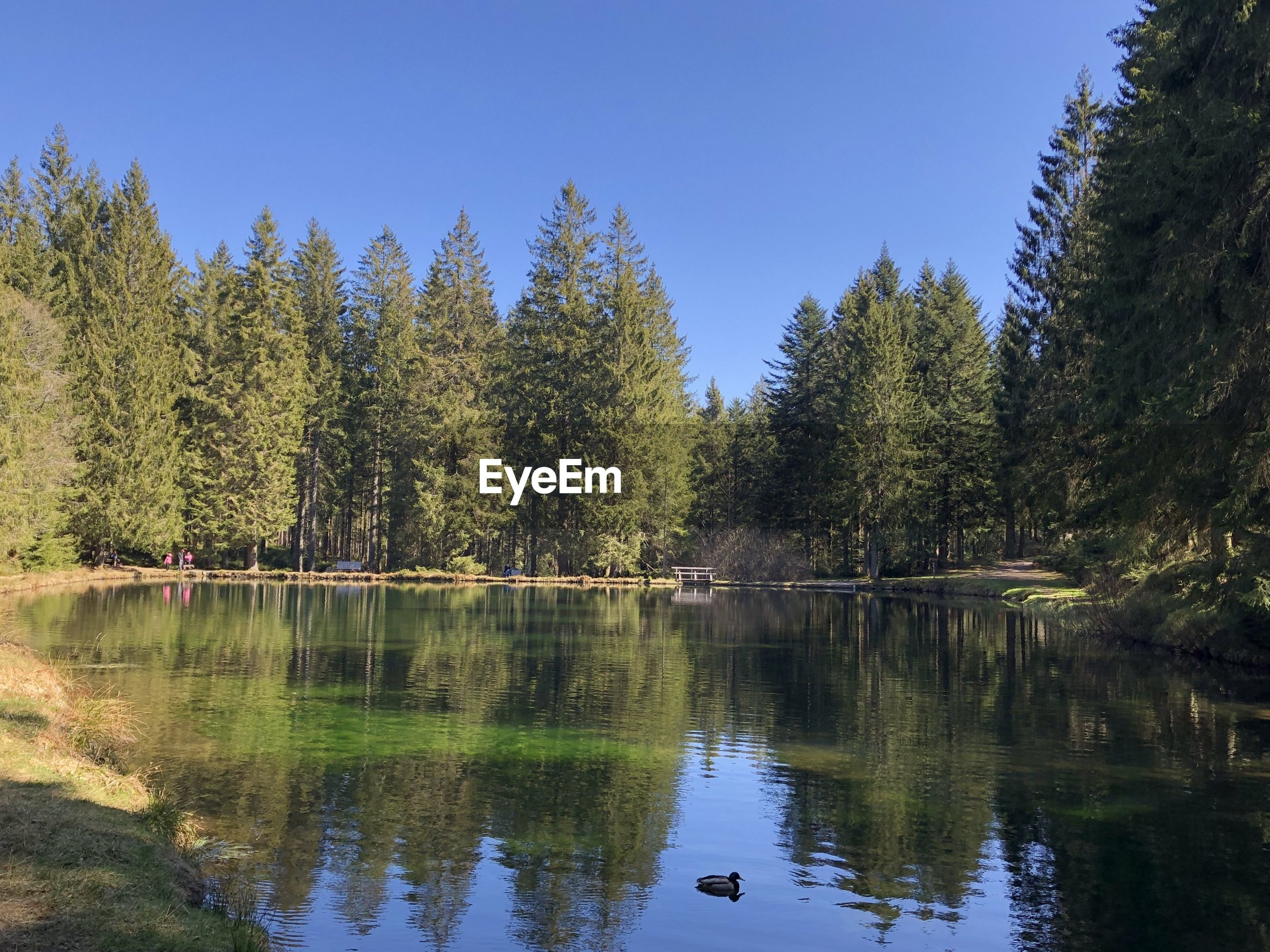 Scenic view of lake in forest against clear sky