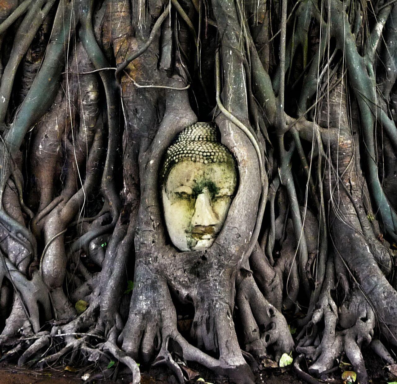 Buddha Sculpture Amidst Tree At Ayuthaya Province
