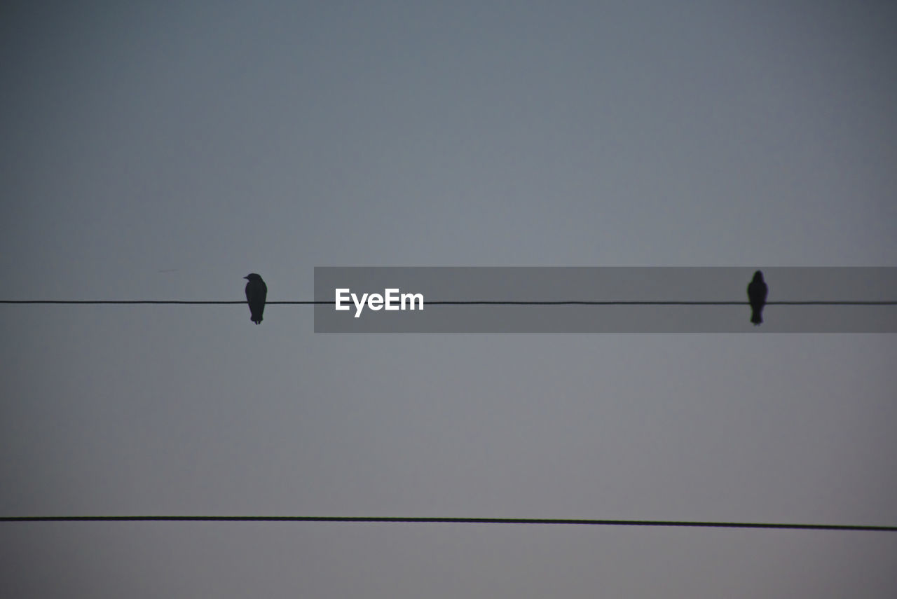 bird, vertebrate, cable, sky, animal, animal themes, low angle view, group of animals, animal wildlife, animals in the wild, perching, electricity, connection, power line, no people, silhouette, clear sky, nature, copy space, telephone line, power supply, flock of birds