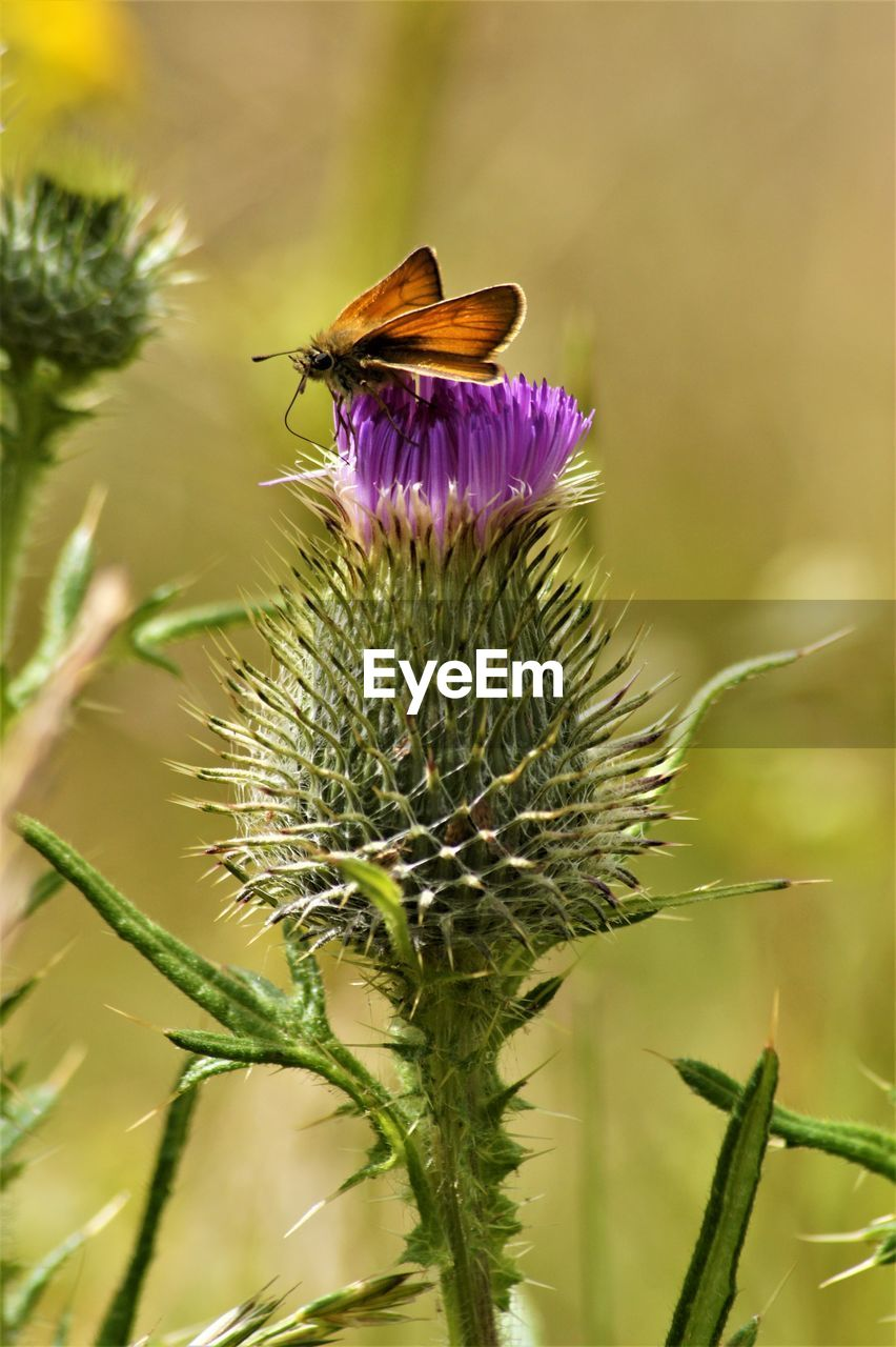 flower, plant, flowering plant, animals in the wild, beauty in nature, animal themes, animal wildlife, fragility, growth, close-up, animal, one animal, vulnerability, freshness, insect, petal, flower head, invertebrate, bee, focus on foreground, pollination, no people, purple, outdoors, sepal