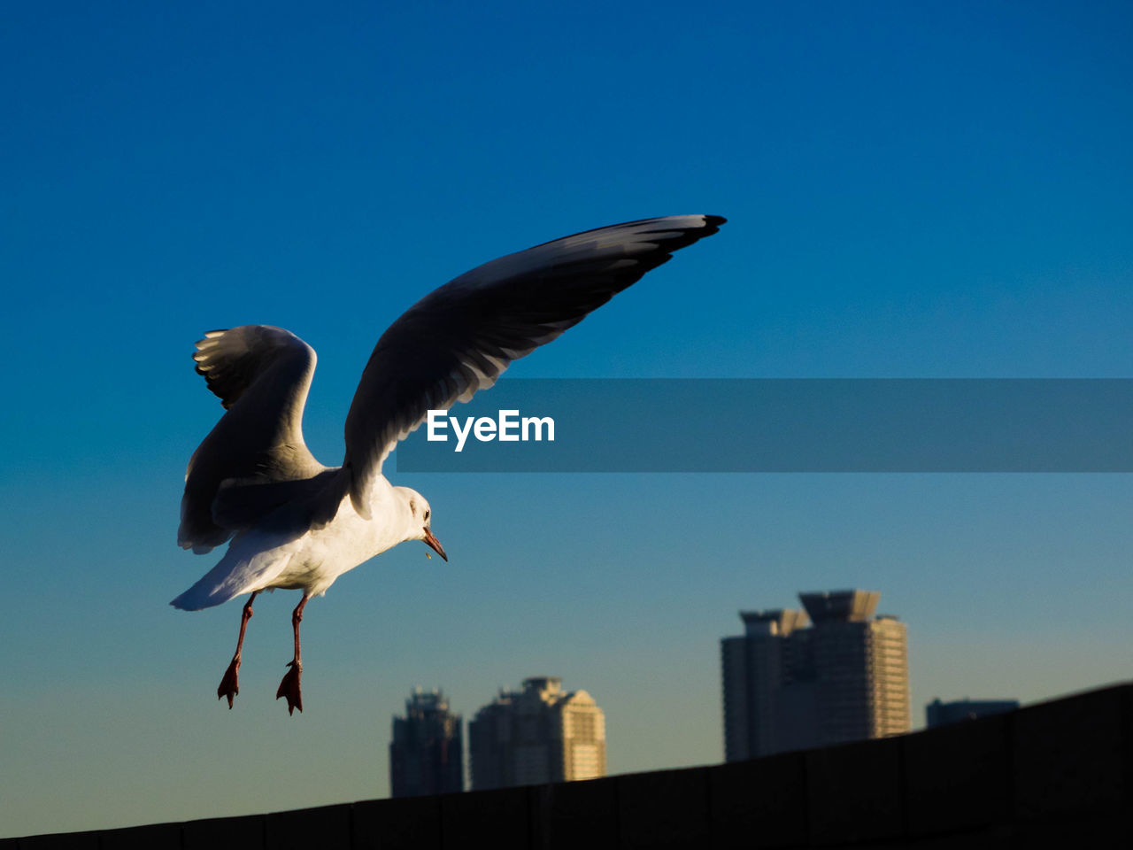 vertebrate, bird, animals in the wild, animal wildlife, flying, animal themes, animal, sky, spread wings, low angle view, nature, architecture, group of animals, blue, clear sky, no people, two animals, built structure, seagull, building exterior, outdoors