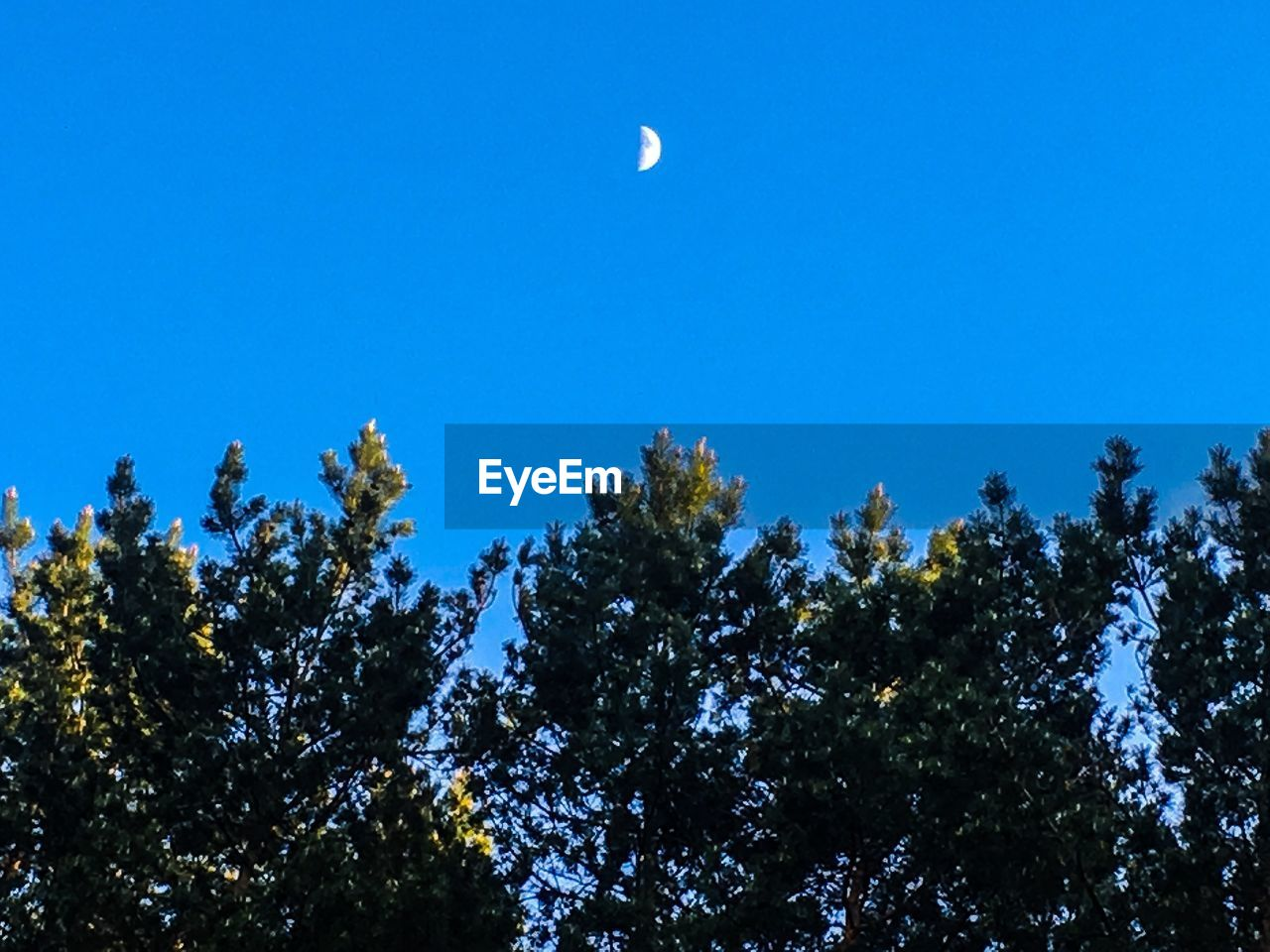 tree, plant, sky, low angle view, beauty in nature, moon, blue, growth, nature, clear sky, tranquility, no people, scenics - nature, tranquil scene, space, astronomy, half moon, outdoors, day, silhouette, treetop, planetary moon