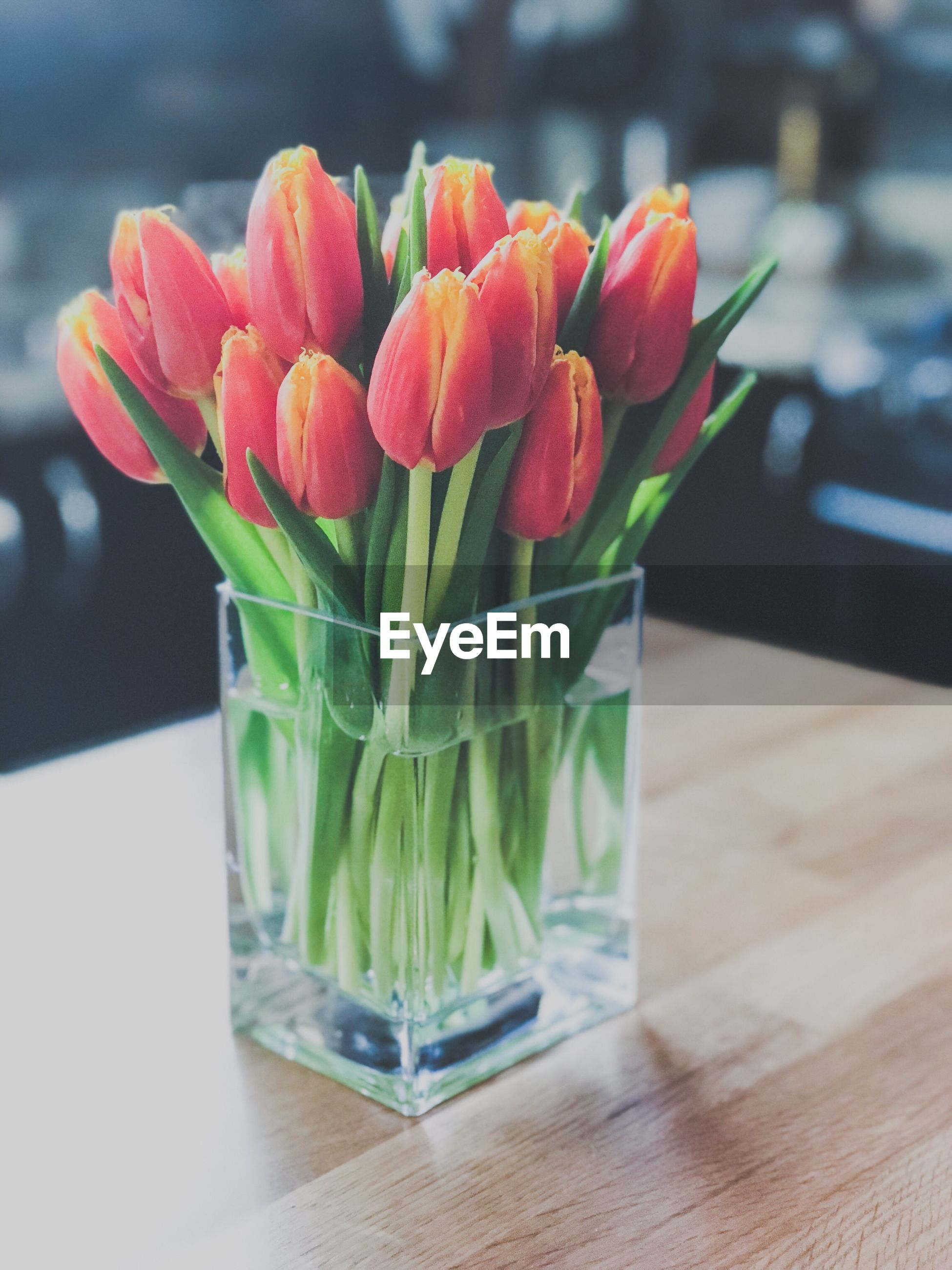 Close-up of tulip flower vase on table