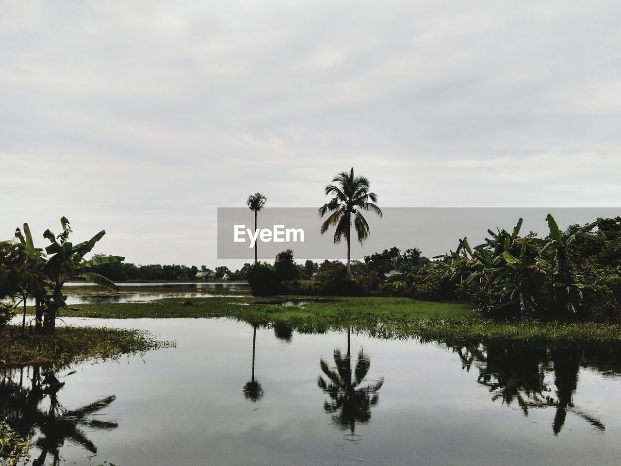 palm tree, reflection, water, tree, sky, cloud - sky, waterfront, beauty in nature, nature, standing water, tranquility, outdoors, lake, scenics, no people, day