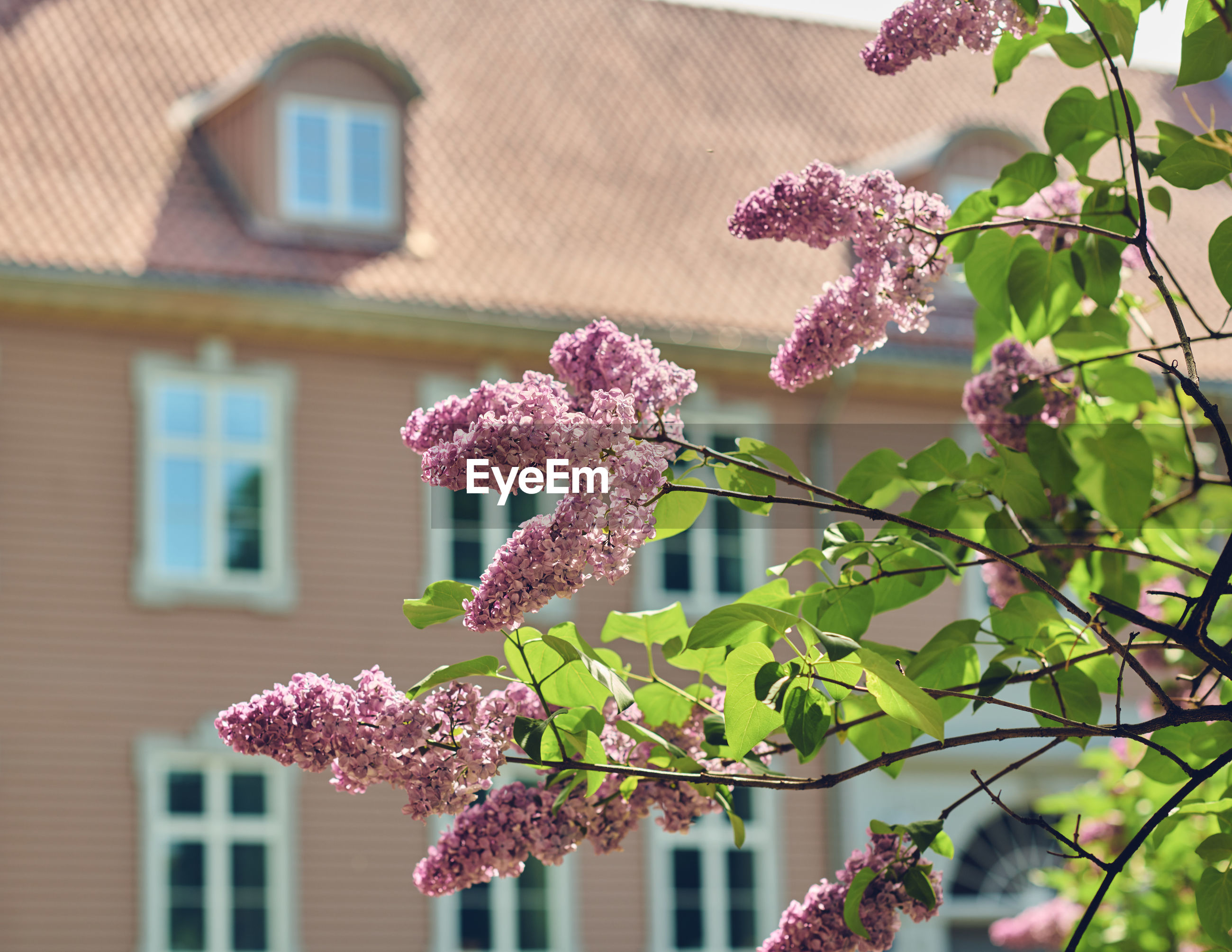 PINK FLOWERING PLANT AGAINST HOUSE