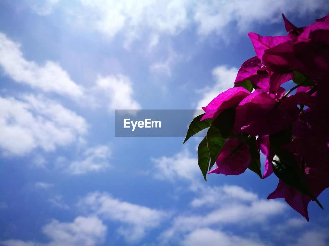 beauty in nature, flower, flowering plant, cloud - sky, plant, sky, vulnerability, fragility, growth, nature, pink color, petal, low angle view, freshness, close-up, leaf, flower head, no people, day, plant part, outdoors, purple