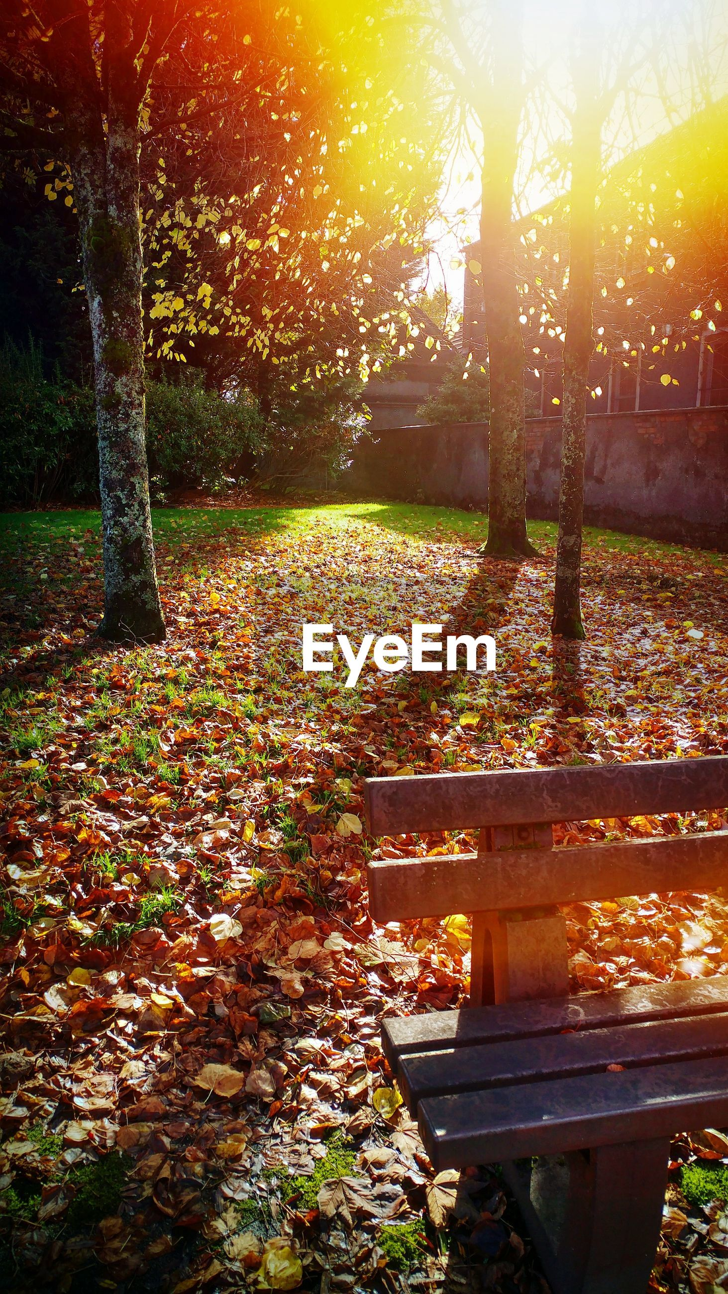 SUNLIGHT FALLING ON BENCH IN PARK AT AUTUMN