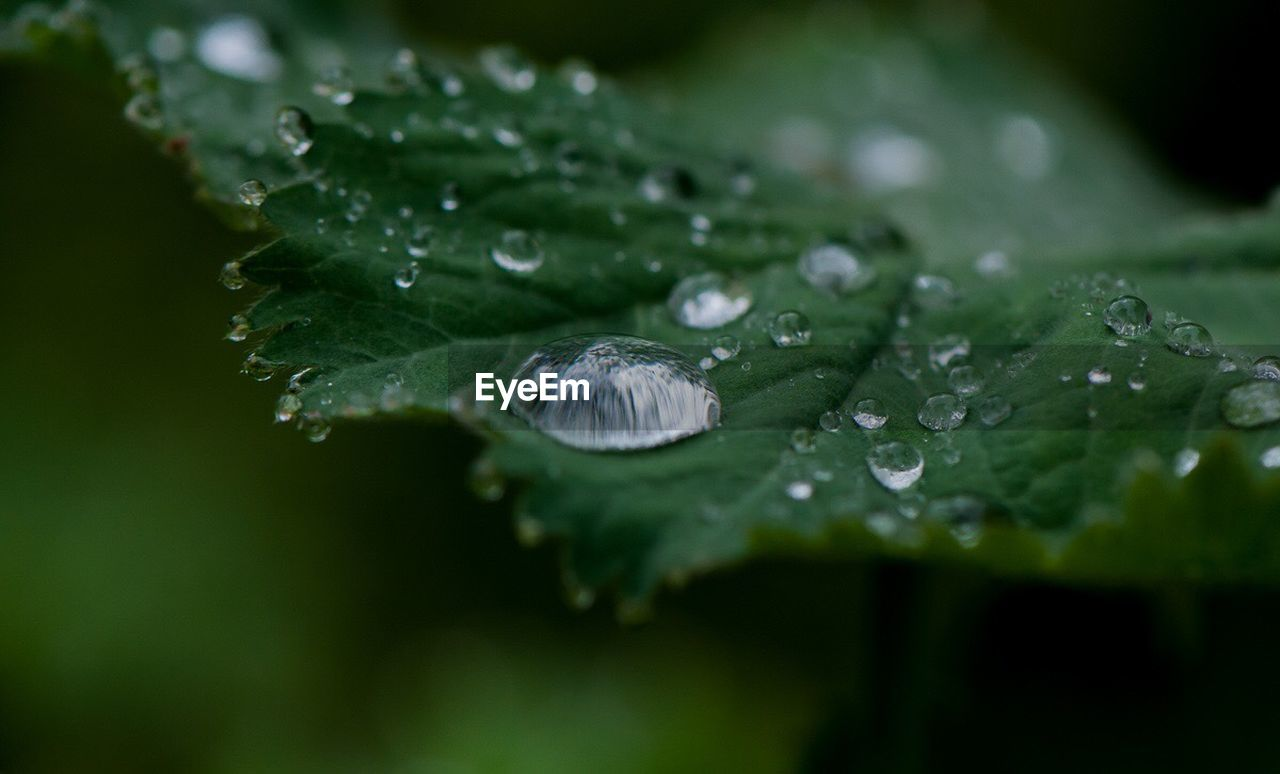 drop, water, leaf, wet, green color, nature, growth, close-up, freshness, raindrop, droplet, fragility, beauty in nature, selective focus, outdoors, plant, day, no people, purity
