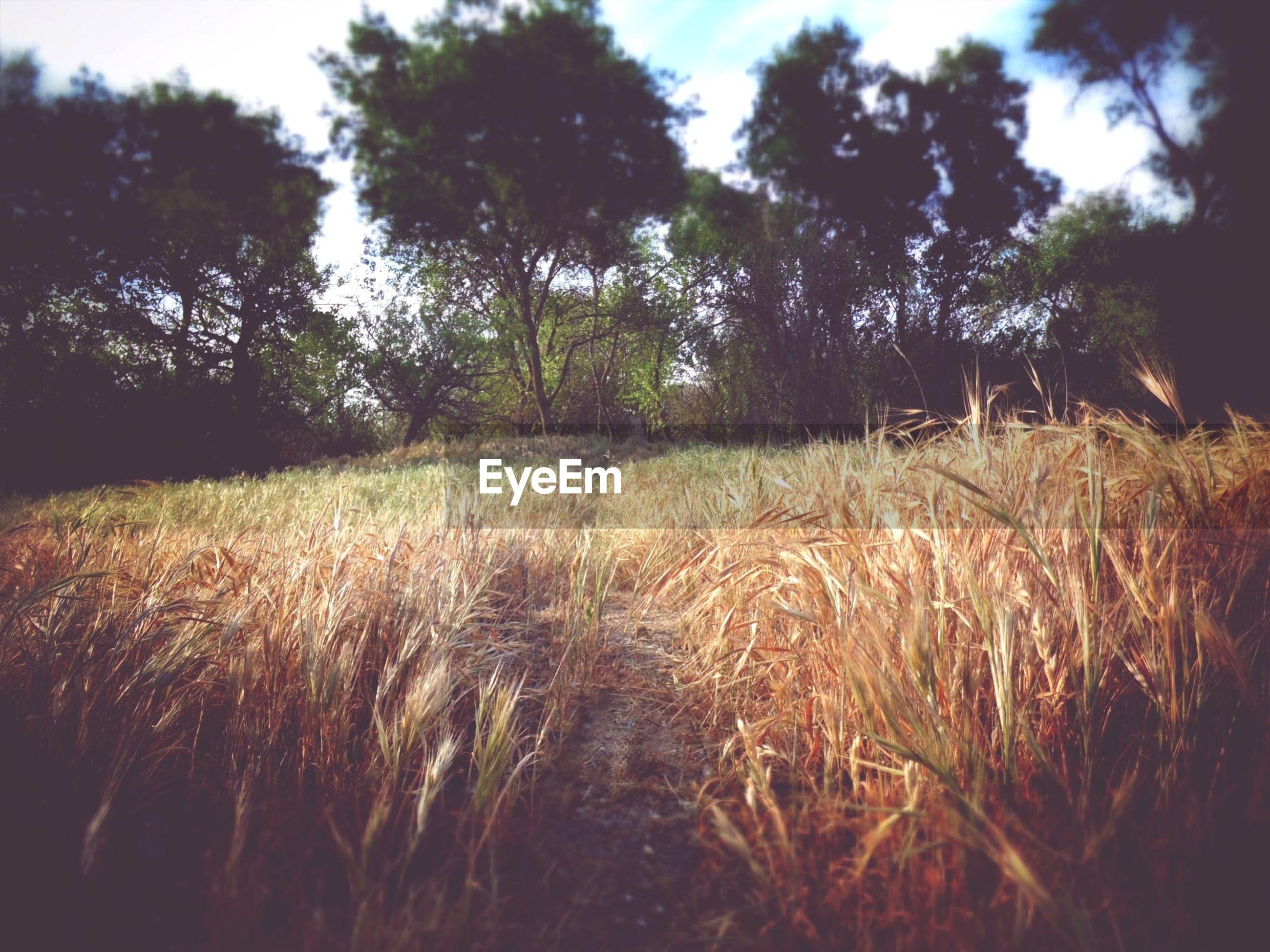 Trees growing in grass field