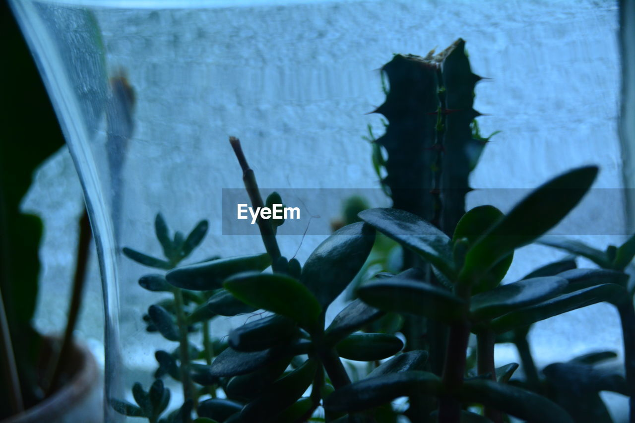 Close-Up Of Plant Growing In Glass