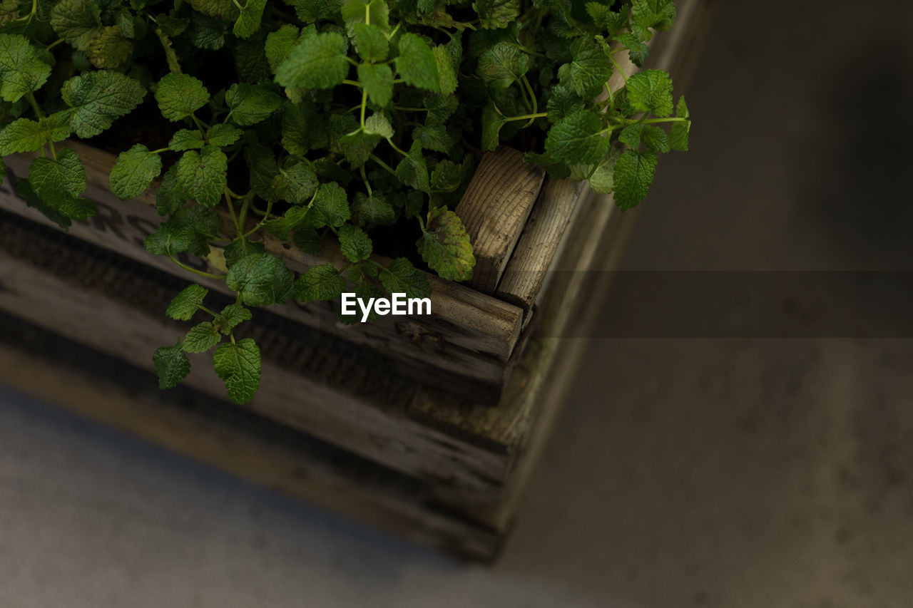 plant, green color, plant part, leaf, growth, no people, wood - material, nature, high angle view, container, selective focus, potted plant, day, outdoors, close-up, freshness, wellbeing, basket, food and drink, healthy eating, herb