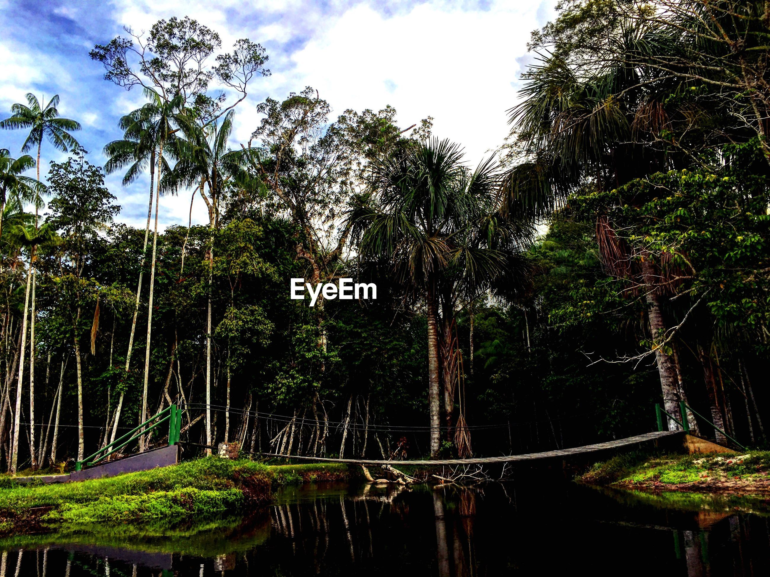 tree, palm tree, nature, tranquility, no people, growth, outdoors, scenics, beauty in nature, water, sky, day