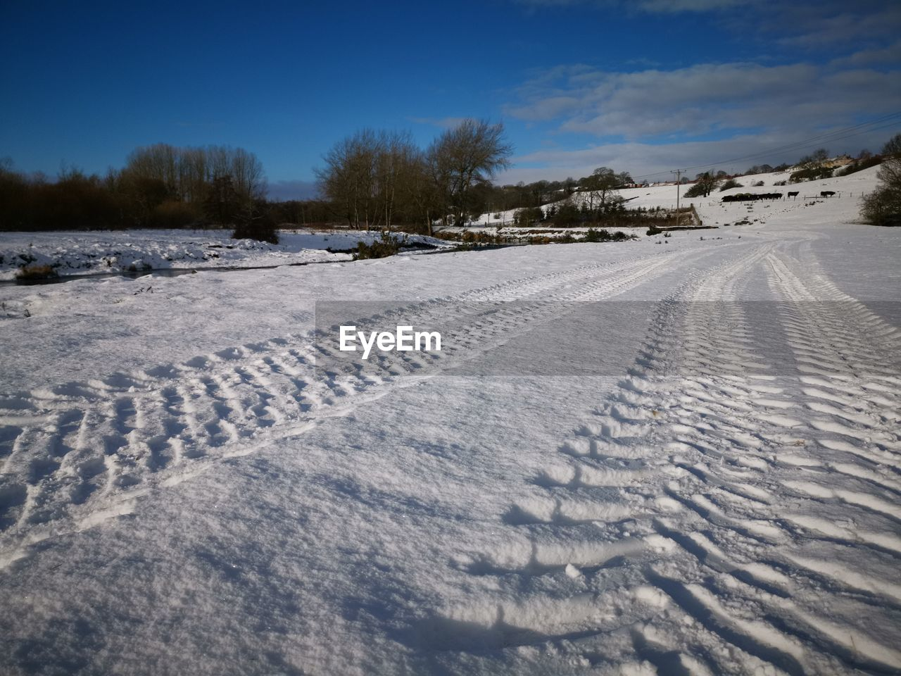 snow, cold temperature, winter, land, nature, sky, field, environment, white color, scenics - nature, landscape, tire track, plant, covering, tranquil scene, no people, tranquility, beauty in nature, tree, outdoors, powder snow