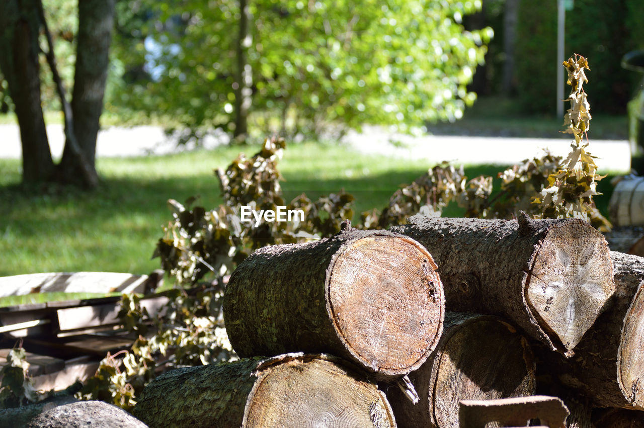 stack, log, timber, focus on foreground, woodpile, deforestation, day, forestry industry, field, wood - material, no people, heap, outdoors, tree, nature, close-up