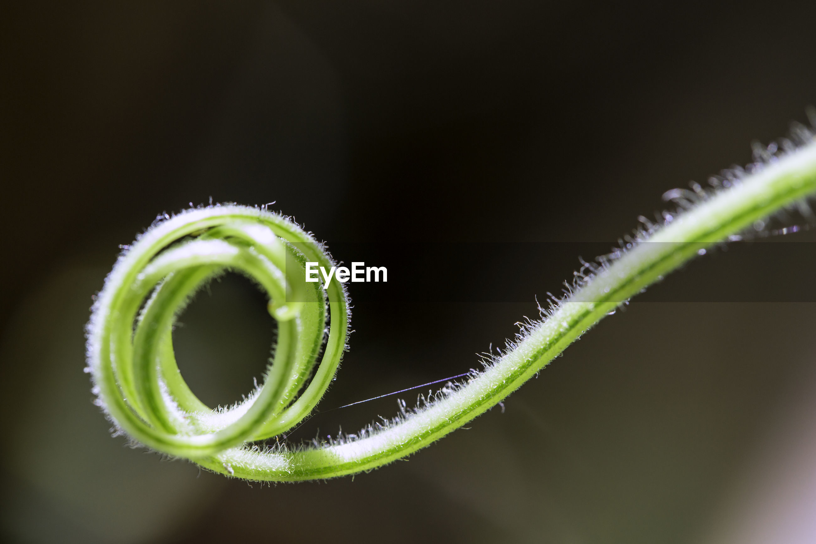 green color, tendril, close-up, spiral, plant, nature, no people, fragility, leaf, beauty in nature, growth, freshness, fern, day, outdoors, animal themes