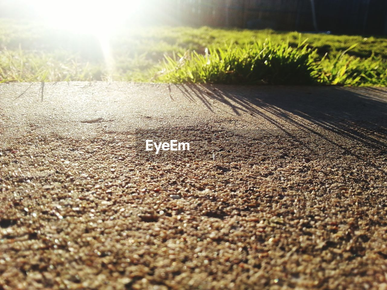 surface level, nature, sunlight, no people, the way forward, day, outdoors, selective focus, tranquility, growth, close-up, grass, beauty in nature