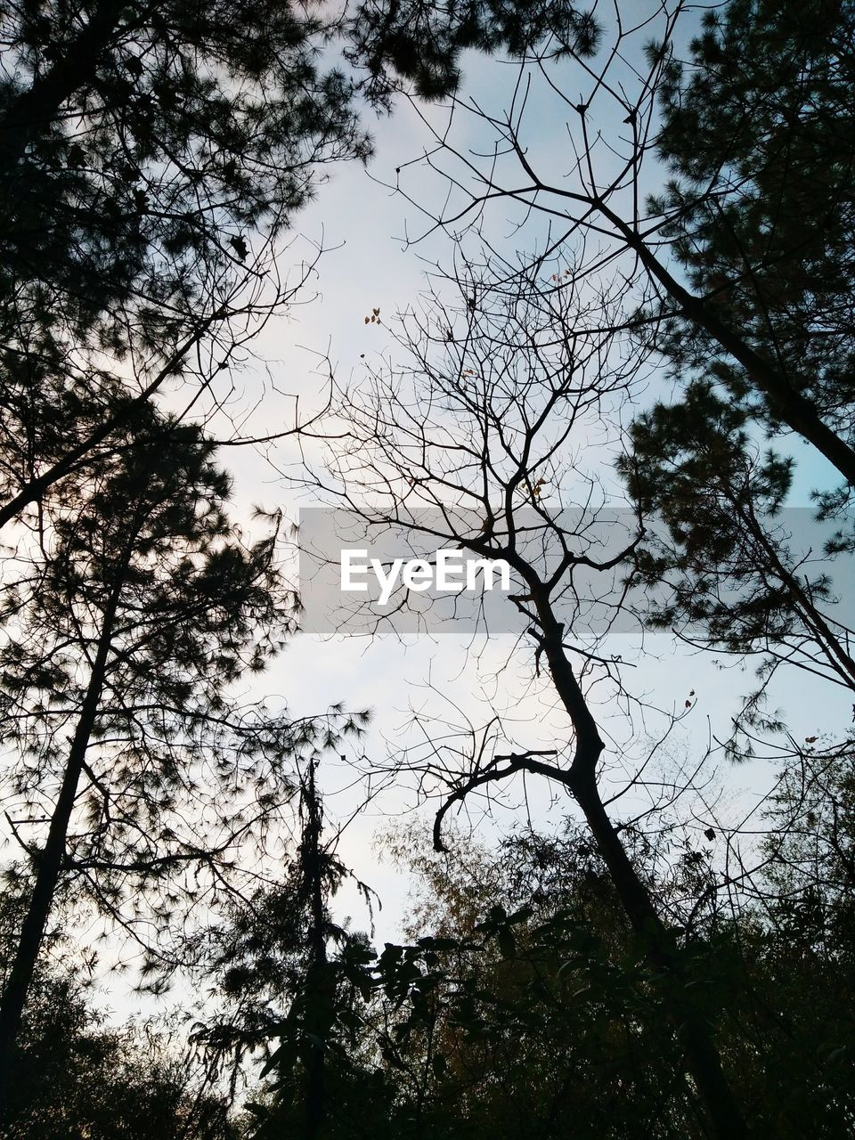 tree, low angle view, nature, beauty in nature, branch, no people, sky, outdoors, day, forest, tranquility, growth, scenics, clear sky