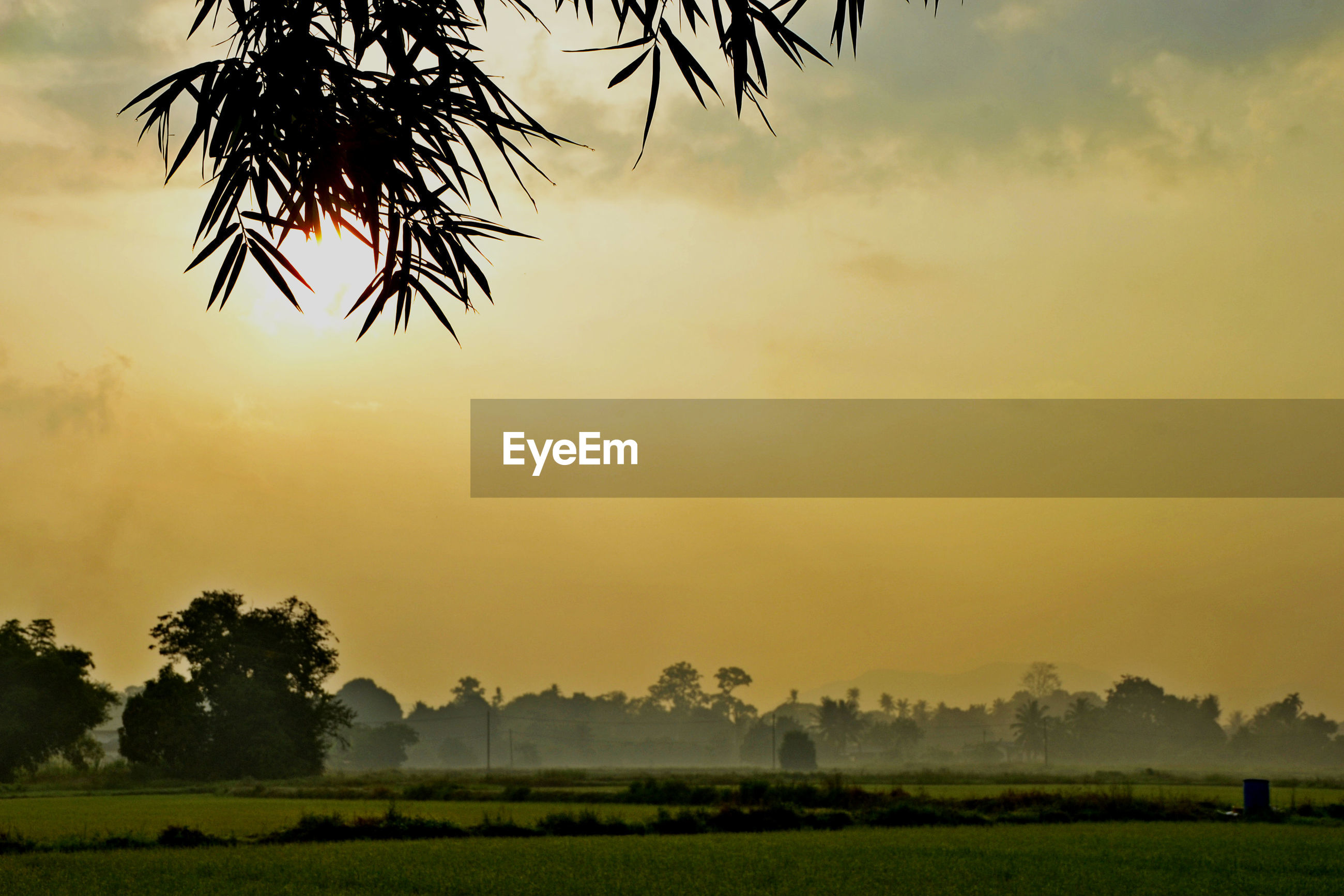 plant, sky, tree, beauty in nature, scenics - nature, tranquil scene, sunset, tranquility, environment, landscape, nature, growth, field, no people, land, palm tree, non-urban scene, outdoors, idyllic, grass, coconut palm tree