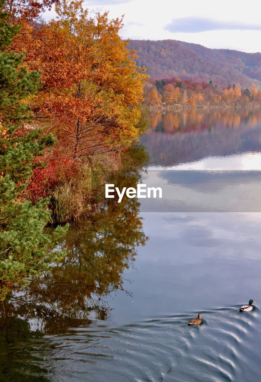 water, lake, plant, tree, autumn, beauty in nature, change, tranquility, nature, scenics - nature, tranquil scene, day, no people, non-urban scene, sky, reflection, orange color, idyllic, growth, outdoors