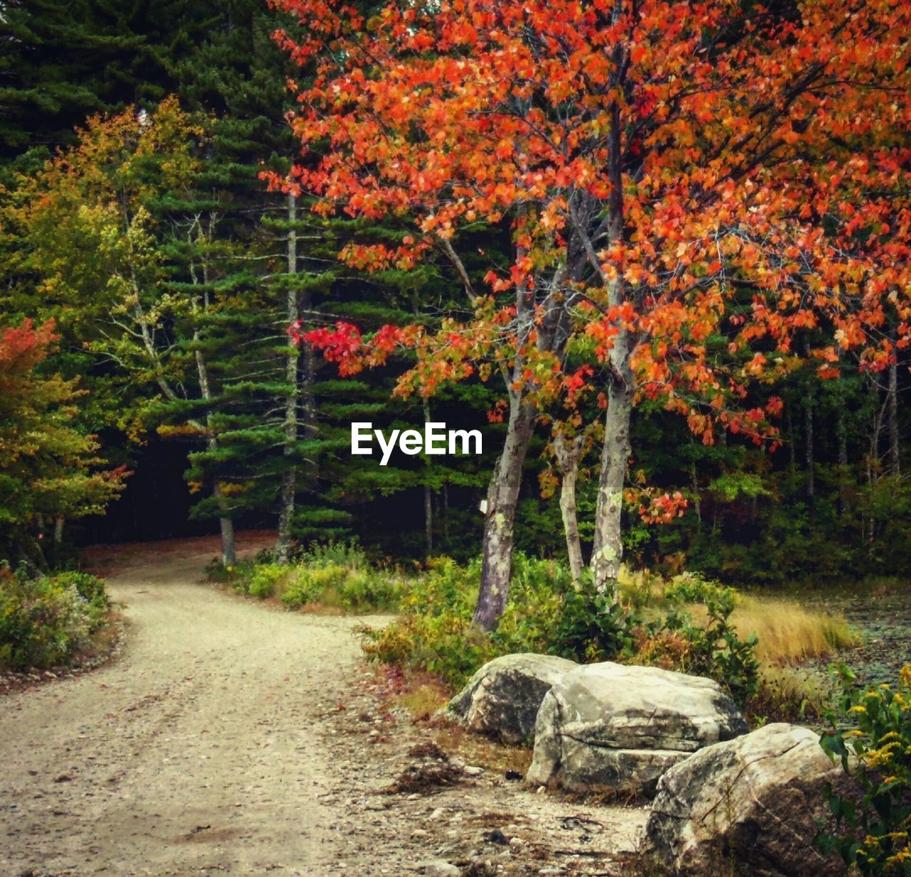 tree, nature, forest, growth, no people, tranquility, autumn, beauty in nature, outdoors, scenics, day