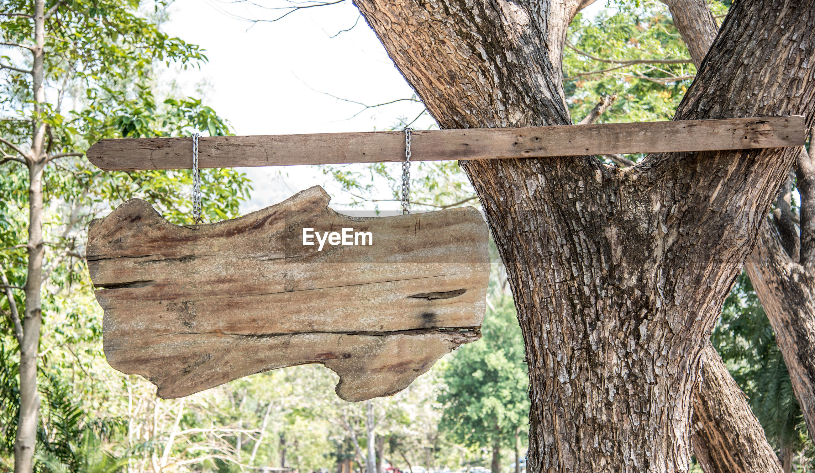 Close-up of blank wooden signboard hanging from tree trunk in forest
