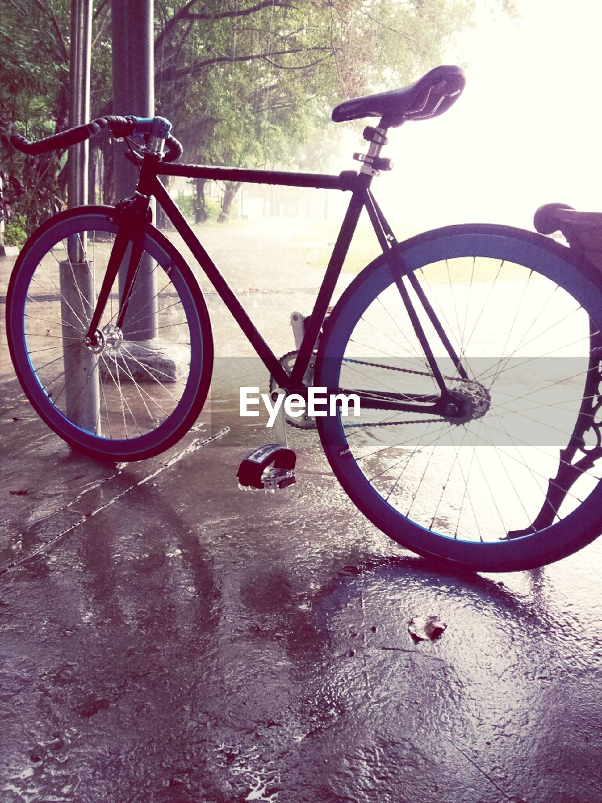 bicycle, transportation, mode of transport, land vehicle, wheel, stationary, parking, no people, parked, day, outdoors, shadow, metal, sunlight, tree, nature, close-up, water, tire, tranquility