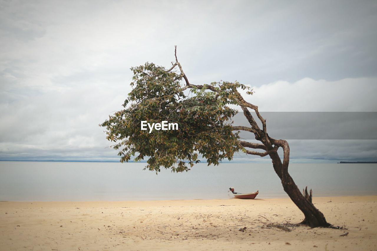 Tree At Beach Against Cloudy Sky
