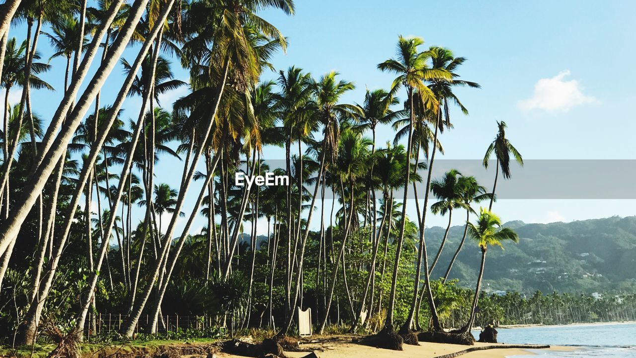 tree, plant, palm tree, tropical climate, sky, growth, beauty in nature, water, nature, tranquility, scenics - nature, tranquil scene, day, land, green color, no people, outdoors, sea, sunlight, coconut palm tree