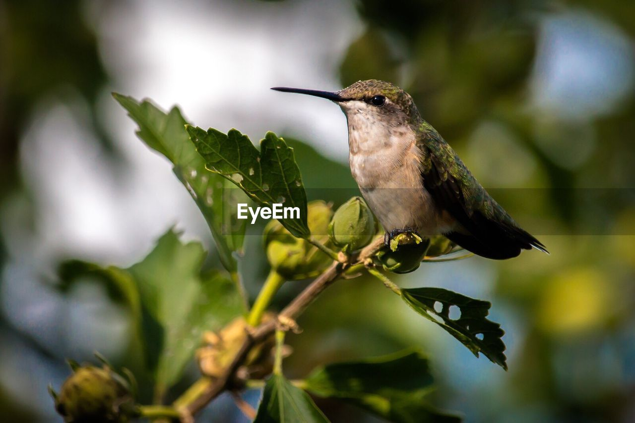 bird, one animal, nature, animals in the wild, outdoors, animal themes, no people, day, green color, growth, close-up, beauty in nature, perching, tree, sky