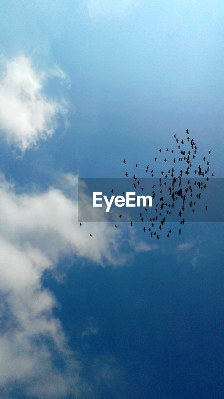 large group of animals, animal themes, flying, animals in the wild, bird, flock of birds, sky, migrating, wildlife, cloud - sky, low angle view, nature, animal wildlife, beauty in nature, no people, outdoors, mid-air, togetherness, silhouette, day, scenics