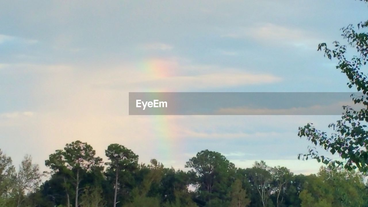 tree, plant, sky, rainbow, cloud - sky, beauty in nature, nature, tranquility, day, scenics - nature, no people, growth, outdoors, tranquil scene, environment, low angle view, multi colored, non-urban scene, idyllic