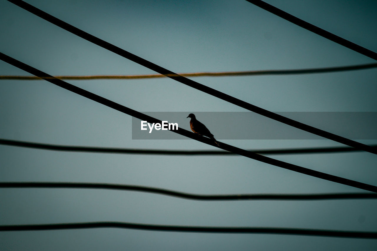 LOW ANGLE VIEW OF A BIRD PERCHING ON A CABLE