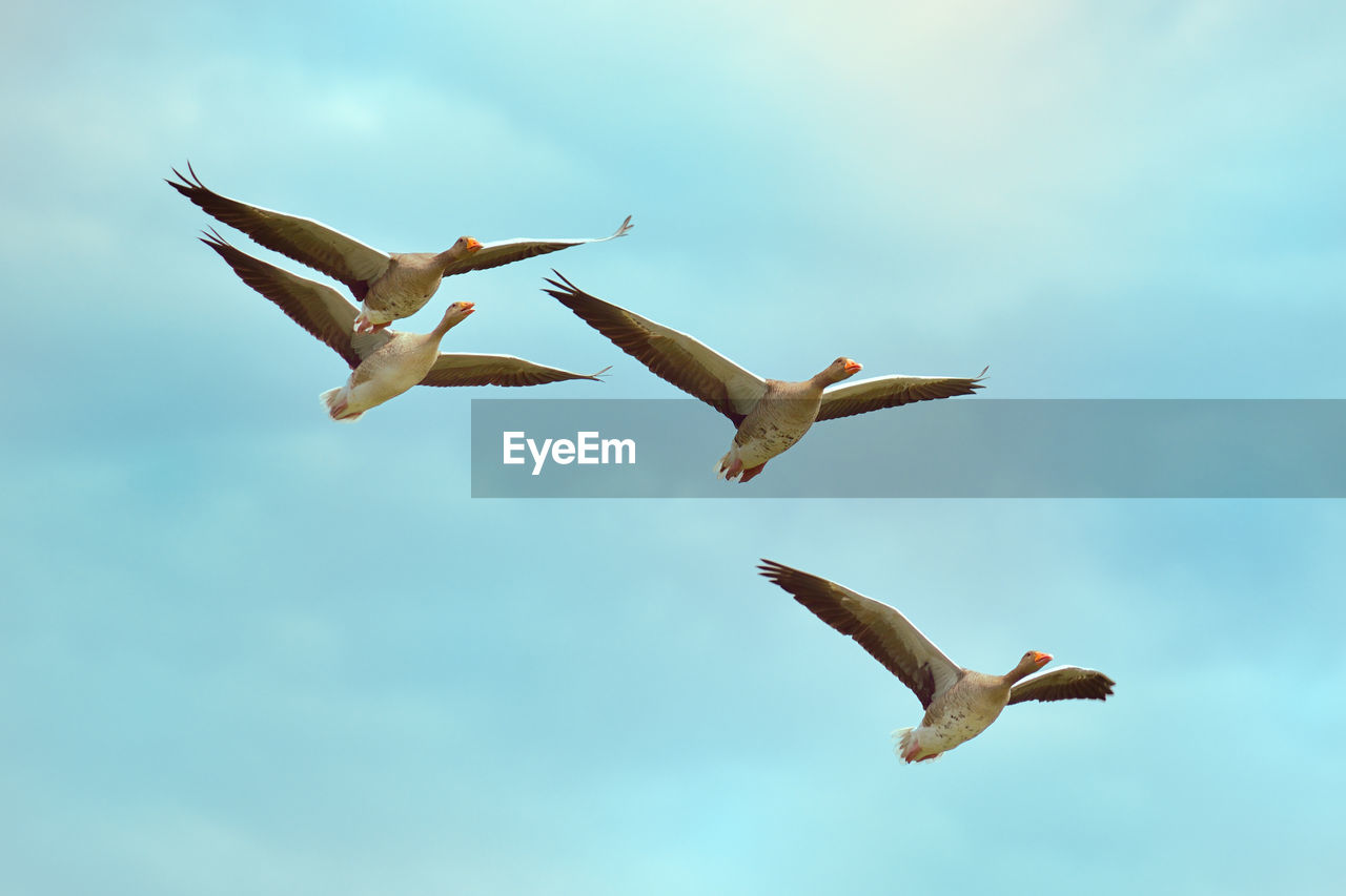 flying, animals in the wild, animal themes, spread wings, bird, mid-air, animal wildlife, day, nature, sky, seagull, low angle view, no people, motion, outdoors, beauty in nature, full length