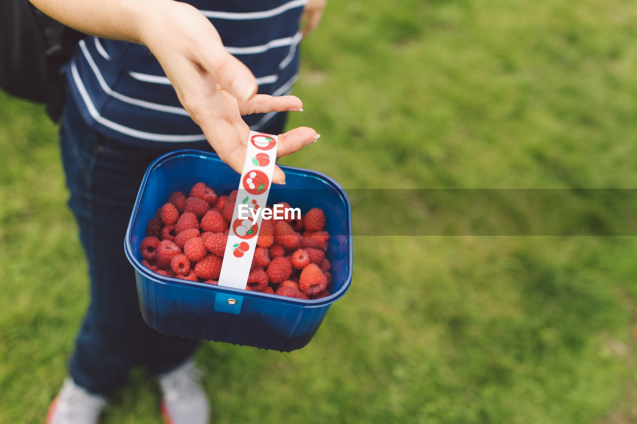 ONE WOMAN HOLDING A BASKET WITH RIPE RASPBERRIES
