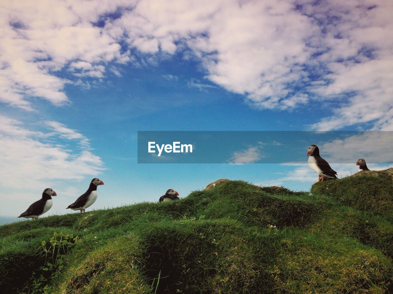 sky, nature, animal themes, day, cloud - sky, togetherness, outdoors, grass, beauty in nature, scenics, bird, real people