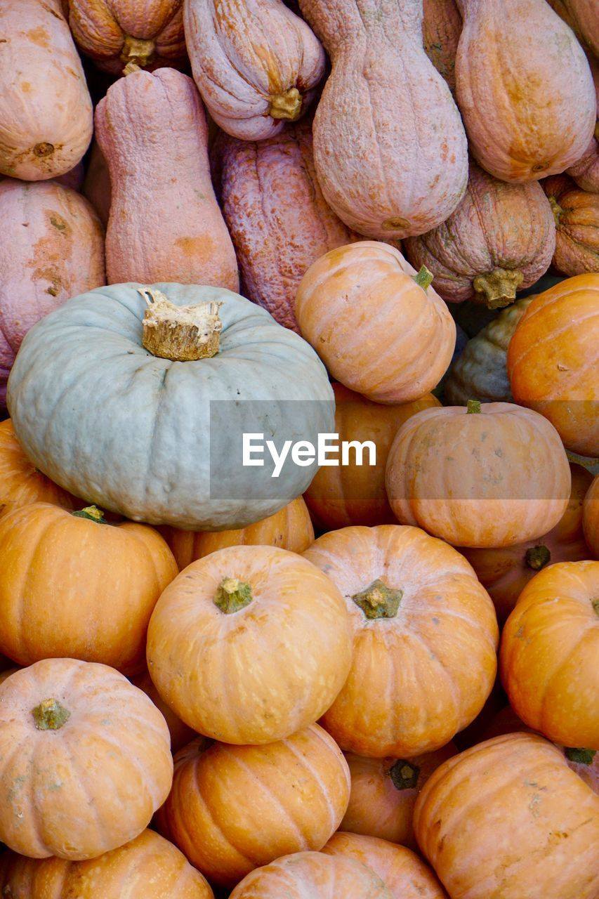 pumpkin, food and drink, food, backgrounds, halloween, full frame, no people, healthy eating, abundance, vegetable, freshness, for sale, retail, close-up, day, squash - vegetable, outdoors