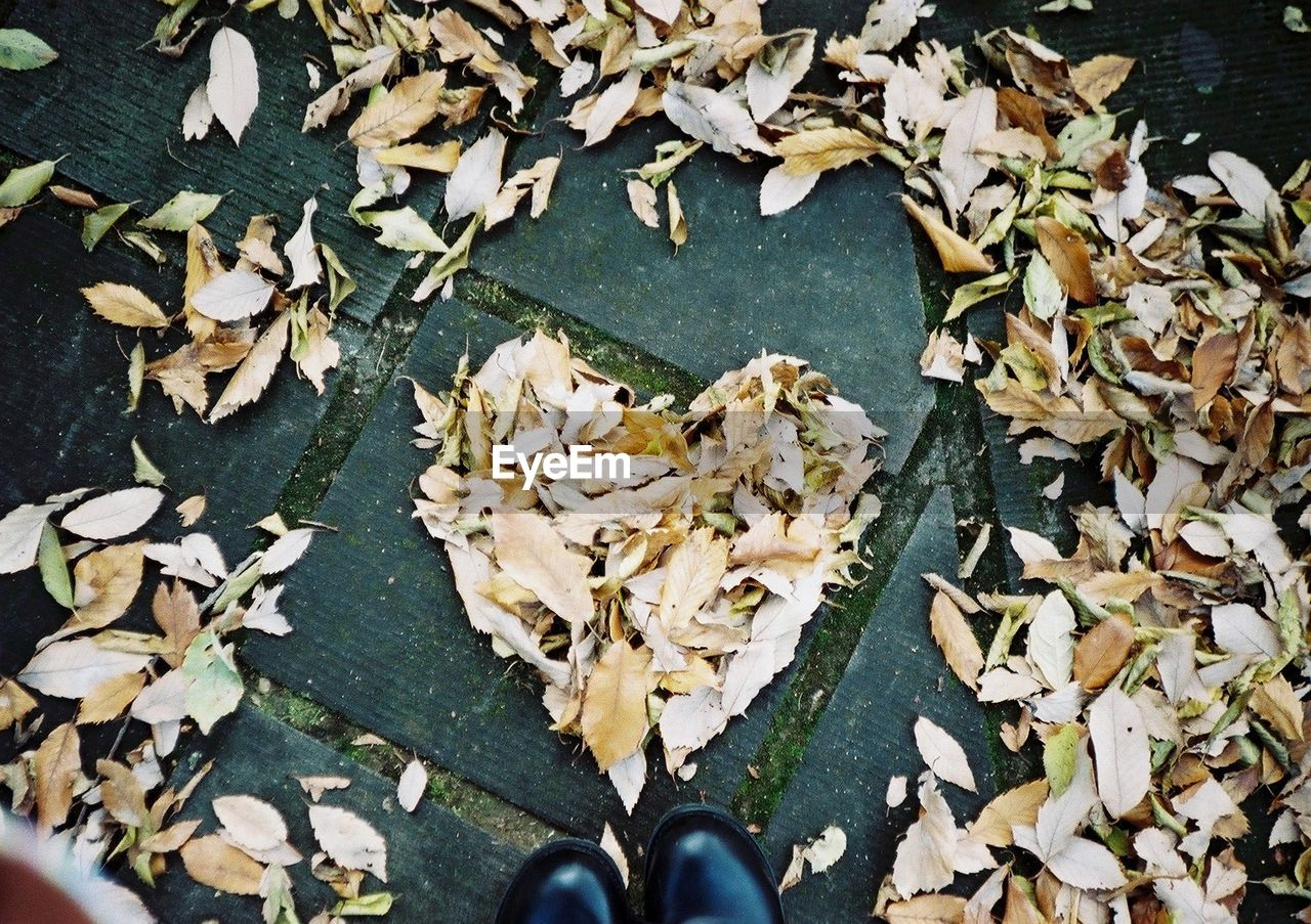 leaf, leaves, high angle view, autumn, nature, day, beauty in nature, outdoors, one person, close-up, people
